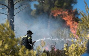 Μεγάλη φωτιά στη Νέα Μάκρη: Μάχη της Πυροσβεστικής