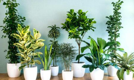 Σπίτι: Ποια φυτά ενισχύουν την ευημερία σας