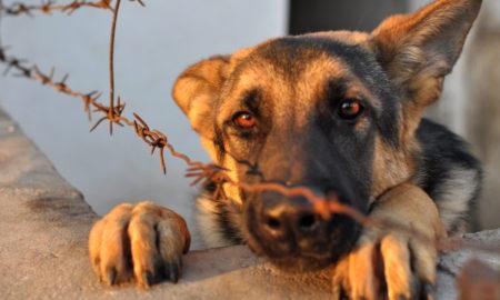 Κακοποίηση ζώων: Ο Βορίδης ανακοίνωσε πως μετατρέπεται σε κακούργημα