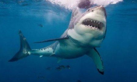 Βίντεο με καρχαρία: Σέρφερ στην Αυστραλία γλιτώνει τελευταία στιγμή από τα σαγόνια του