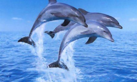 Μυστήριο στην Ισπανία: Aκέφαλα δελφίνια στις ακτές και έρευνα της αστυνομίας