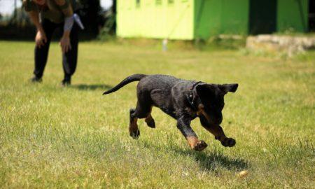 Εκπαίδευση σκύλου: Εντοπίστε τα λάθη σας και γίνετε ο καλύτερος εκπαιδευτής του τετράποδου φίλου σας