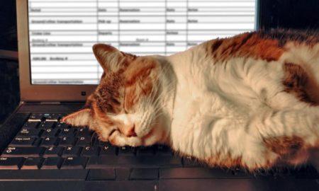 Γάτες: Μάθετε γιατί λατρεύουν το πληκτρολόγιό σας