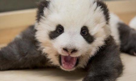 Ζωολογικό πάρκο στην Ολλανδία: Το πρώτο γιγαντιαίο πάντα ξετρελαίνει τους επισκέπτες