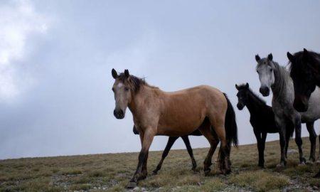 Βήμα προόδου για τα δικαιώματα των ζώων: Πρώτη φορά διαβατήριο για τα ιπποειδή
