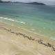 Νέα Ζηλανδία: Νεκρά στις ακτές 100 δελφίνια και φάλαινες