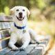 Συγκινητικό βίντεο: Ιδιοκτήτες ξαναβλέπουν τον σκύλο τους, που είχε κλαπεί, 6 χρόνια μετά