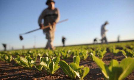 Αγρότες: Ακατάσχετες και αφορολόγητες οι ενισχύσεις Covid