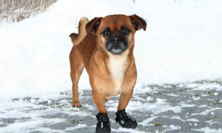 Σκύλος: Mπότες για τα αγαπημένα σας τετράποδα από την UGG