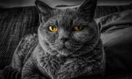Είναι γεγονός: Οι γάτες θέλουν να μας σκοτώσουν