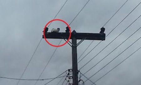 Γατάκι στην κορυφή στύλου ηλεκτροδότησης: Επιχείρηση διάσωσης από τους υπαλλήλους του ΔΕΔΔΗΕ