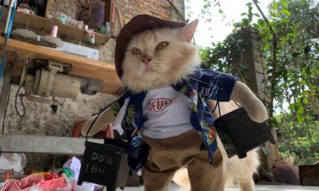 Πρώην δάσκαλος γίνεται διάσημος στους φιλόζωους: Υψηλή ραπτική για γάτες
