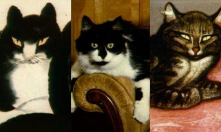 Νέα Υόρκη: To Mητροπολιτικό Μουσείο Τέχνης δημιούργησε ένα εξαιρετικό ντοκιμαντέρ για γάτες