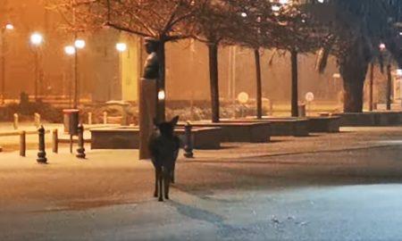 Ελάφια: Έφτασαν μέχρι το Δημαρχείο της Λήμνου, αναζητώντας καταφύγιο από τα χιόνια