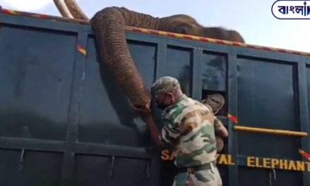Viral Video: Δασοφύλακας λυγίζει αποχαιρετώντας νεκρό ελέφαντα