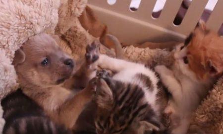 Υπέροχο βίντεο από Νιγηρία: Γάτα θηλάζει αδέσποτο σκυλάκι