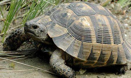 Θαλάσσιο πάρκο του Τένεσι: Υπέροχο βίντεο με χελώνα που χορεύει στη βροχή