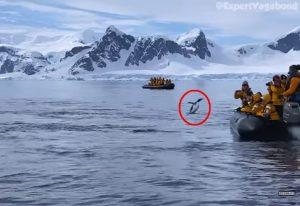 Πανέξυπνος πιγκουίνος πηδάει σε βάρκα με τουρίστες και σώζεται από φάλαινα-δολοφόνο
