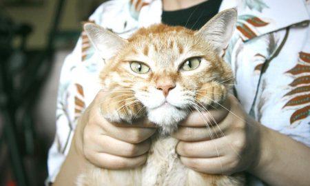 Βρετανική έρευνα: Οι γάτες κολλούν κορονοϊό από τους ανθρώπους