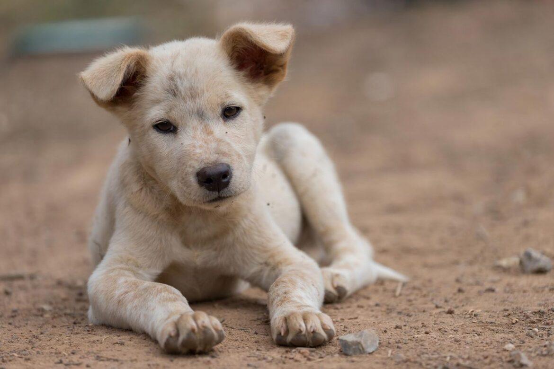 Βρετανικός νόμος: Αναγνωρίζεται πως τα ζώα έχουν συναισθήματα